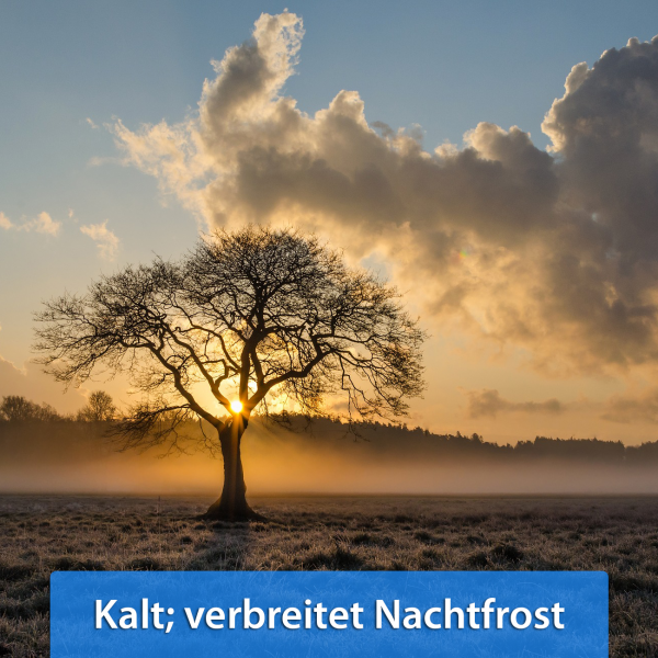 Ende November 2018 Frost