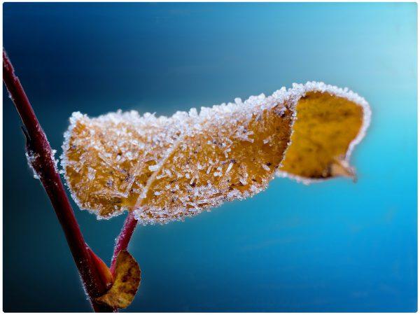 Frost Mitte und Ende November 2018