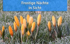 Frost Mitte April 2019