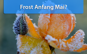 Frost Anfang Mai 2019
