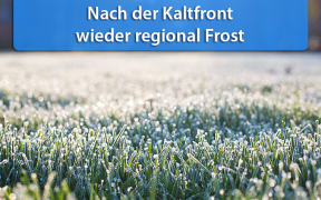 Frost Mitte Mai 2019