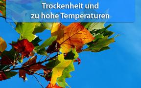 Trockenheit und hohe Temperaturen Herbst 2019