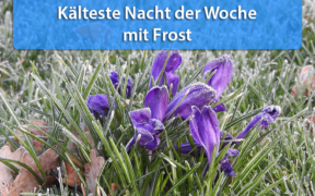 Frost Mitte April 2020