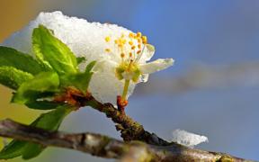 Schnee Anfang Mai 2021