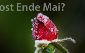 Frost Ende Mai 2021