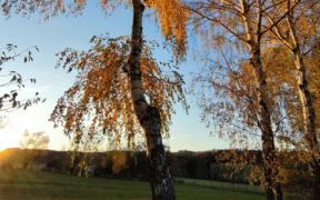 Goldenes Herbstwetter Ende Oktober 2021